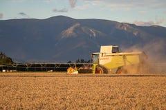 Una máquina segadora funciona en una granja que cosecha una cosecha por la tarde fotografía de archivo libre de regalías