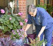 Una más vieja mujer que trabaja en su jardín Imagenes de archivo