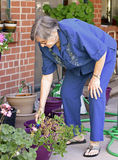 Una más vieja mujer que trabaja en su jardín Imágenes de archivo libres de regalías