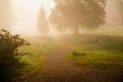 Una mañana brumosa mágica, según lo tomado de un cuento de hadas imagenes de archivo