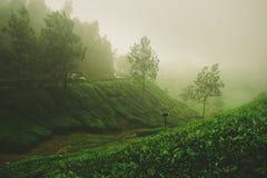 Una mañana de niebla con vistas a la plantación de té Fotografía de archivo libre de regalías