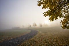 Una mañana muy de niebla del otoño en Finlandia Hay árboles del otoño en la foto Foto de archivo