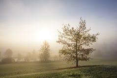Una mañana muy de niebla del otoño en Finlandia Hay árboles del otoño en la foto Foto de archivo libre de regalías