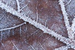 Una macro de una hoja congelada Fotografía de archivo