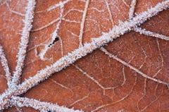 Una macro de una hoja congelada Fotos de archivo