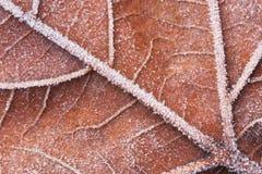 Una macro de una hoja congelada Foto de archivo libre de regalías