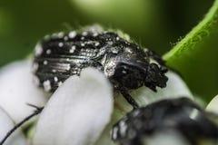 Una macro de un insecto en una flor Imagen de archivo