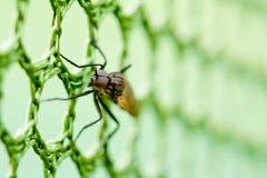 Una macro de una mosca Fotos de archivo