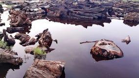 Una madera sola en la charca Imagen de archivo