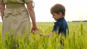Una madre joven y su niño se están colocando en un campo de trigo, el niño que la mano toca la mano de la madre almacen de video