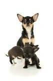Una madre y sus perritos Fotografía de archivo