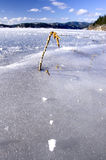 Una mala hierba en un lago congelado. Fotos de archivo libres de regalías