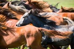 Una manada de caballos jovenes fotografía de archivo libre de regalías