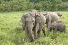 Una manada del elefante en el prado de Dhikala fotografía de archivo libre de regalías