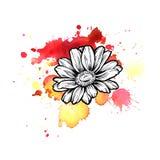 Una mancha blanca /negra informe roja brillante de la acuarela línea gráfico de la flor de la tinta de la margarita fotos de archivo libres de regalías