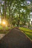 Una manera en el parque natural en una ciudad foto de archivo