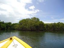 Una mangrovia in una palude della mangrovia fotografia stock libera da diritti