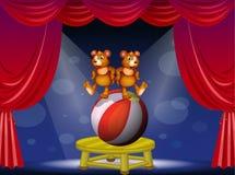 Una manifestazione del circo con due orsi illustrazione di stock
