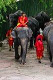 Una manifestazione dell'elefante Fotografia Stock