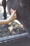Una mano accarezza i cavalli Immagini Stock Libere da Diritti