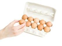 Una mano che mette un uovo nella scatola delle uova Immagine Stock