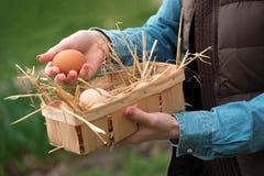 Una mano che tiene un uovo fresco del pollo e le uova organiche in un canestro Fotografia Stock Libera da Diritti