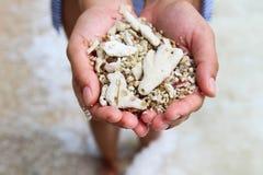 Una mano de la mujer lleva a cabo almejas y el coral en el mar Imagenes de archivo