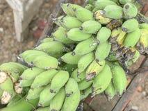 Una mano de plátanos verdes fotografía de archivo libre de regalías