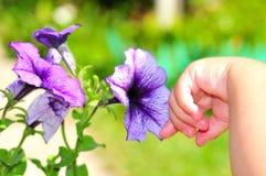 Una mano del `s del pequeño niño que toca una flor Foto de archivo libre de regalías