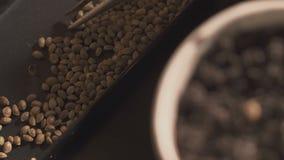 Una mano del ` s del hombre pone las semillas en el suelo Crecimiento profesional de almácigos dentro metrajes