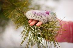 una mano está sosteniendo una puntilla del pino Imagenes de archivo