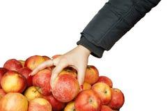 Una mano femenina en una chaqueta toma una manzana Imagenes de archivo