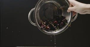 Una mano femenina vuelca el colador con una cereza mojada madura, que cae de él y salpica de la dispersión del agua adentro almacen de video