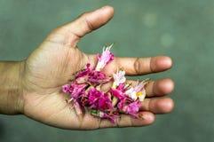 Una mano por completo de flores caidas fotografía de archivo libre de regalías