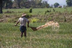 Agricoltura birmana - Myanmar Fotografia Stock Libera da Diritti