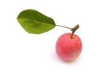 Una manzana con una hoja. Fotos de archivo libres de regalías