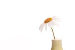 Una margarita en el fondo blanco fotos de archivo