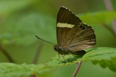 Una mariposa Fotografía de archivo libre de regalías