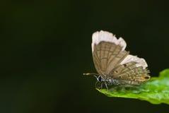 Una mariposa Imagen de archivo