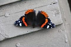 Una mariposa Foto de archivo libre de regalías