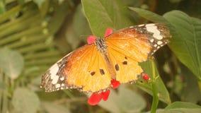 Una mariposa de monarca Imágenes de archivo libres de regalías