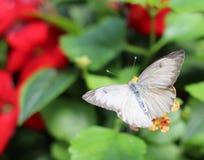 Una mariposa en el invernadero Fotos de archivo libres de regalías