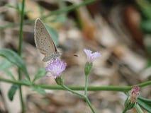Una mariposa en una flor fotografía de archivo libre de regalías