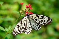Una mariposa en la flor Imagen de archivo libre de regalías