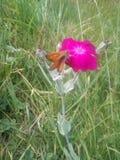 Una mariposa en la flor Imagen de archivo