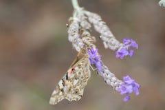 Una mariposa en un jardín botánico Imágenes de archivo libres de regalías
