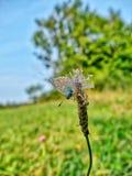 Una mariposa en un prado brillante luminoso Foto de archivo