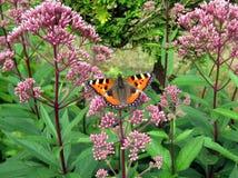 Una mariposa en una flor Fotos de archivo