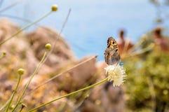Una mariposa en una flor en el fondo suave del beachwith rocoso Imagenes de archivo