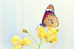 una mariposa encaramada en la flor hermosa Fotos de archivo